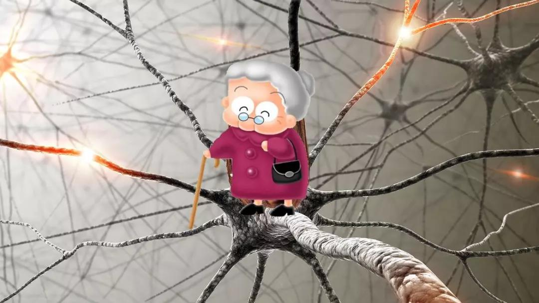 大脑神经系统祖母细胞记忆 微信图片_20180812194657